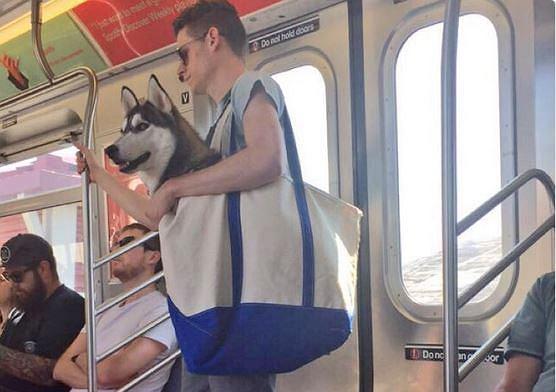 Pies w nowojorskim metrze