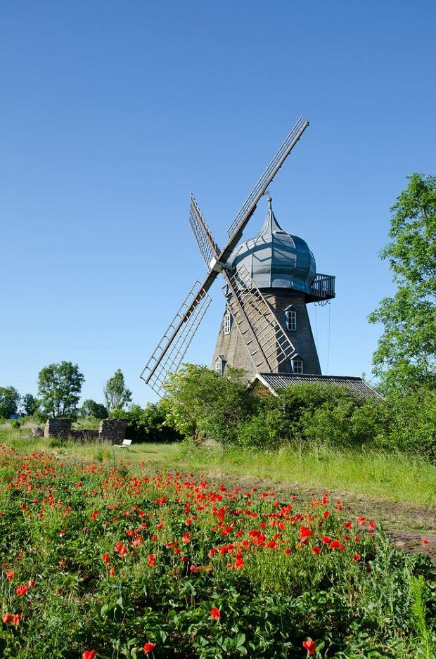 Wiatraki to wizytówka Olandii / fot. Shutterstock