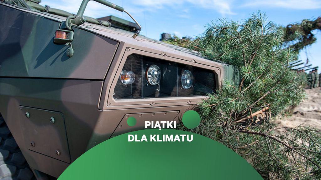 Transporter Rosomak przybrany gałęziami dla maskowania