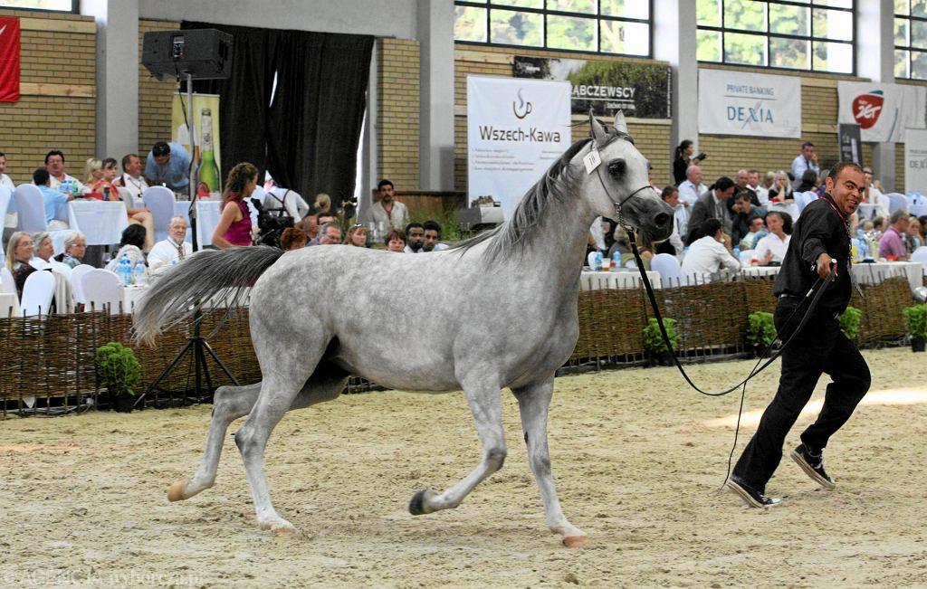 Janów Podlaski, aukcja koni w 2011
