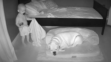 Dziecko wymknęło się w nocy z łóżka i podeszło do psa. Nagranie zaskoczyło mamę