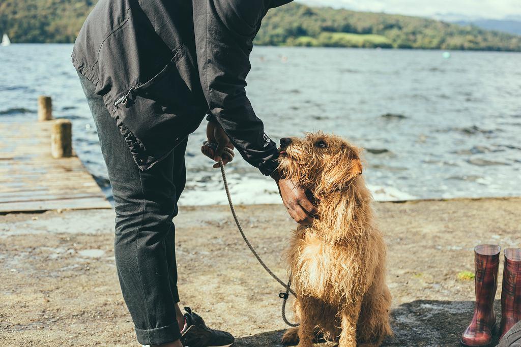 Psy wpływają również na rozwój społeczny, emocjonalny i poznawczy u dzieci.