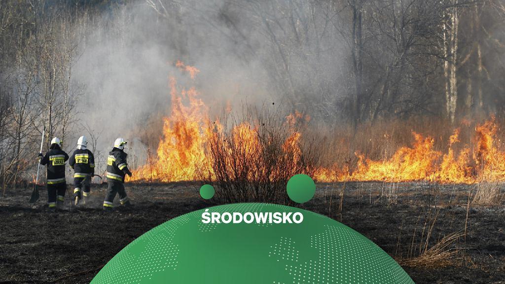 Pożary lasów w Polsce