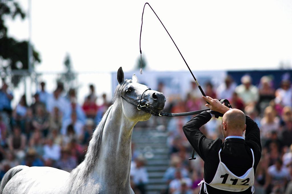 Janów Podlaski, aukcja koni