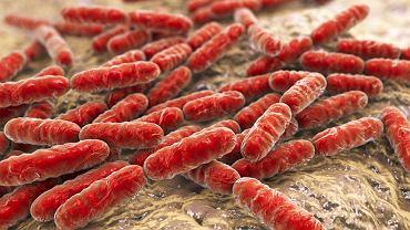 Bacteria Lactobacillus