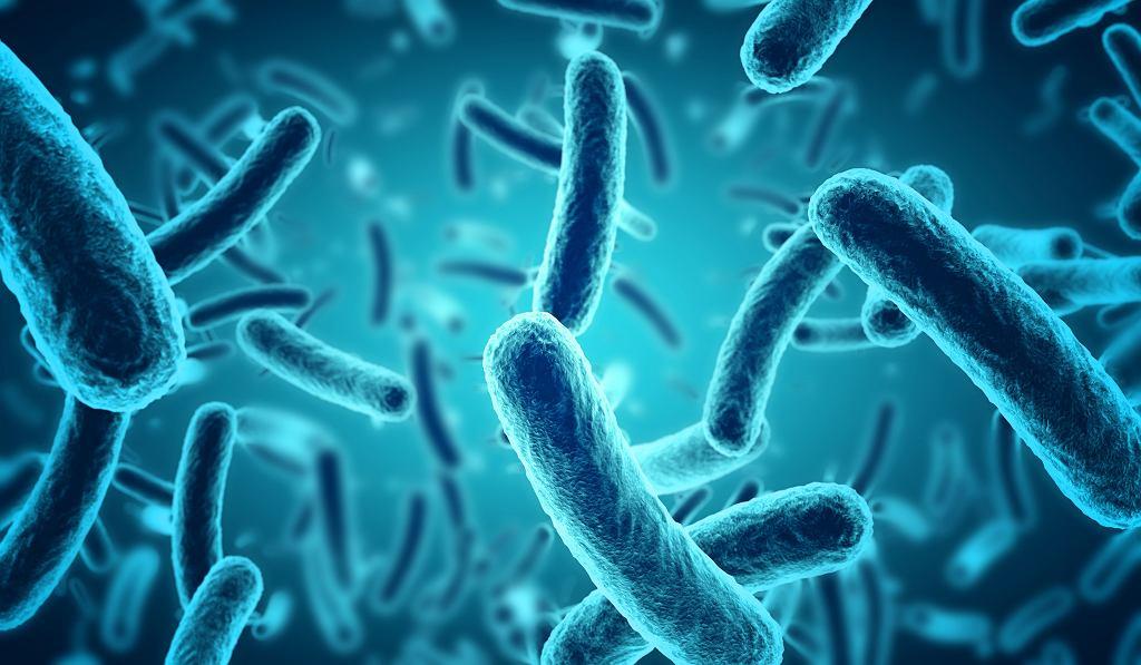 Powszechna wiedza o bakteriach jest mocno powierzchowna. Wśród dostępnych na rynku probiotyków są bardzo dobre, średnie i całkiem słabe. Tymczasem uważana za wroga Escherichia bywa sprzymierzeńcem. Tylko niektóre szczepy są chorobotwórcze. Bakteria staje się też groźna, gdy zostanie zawleczona poza swoje naturalne siedlisko. Bakterie - obraz mikroskopowy