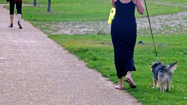 Suczka znalazła wibrator na spacerze