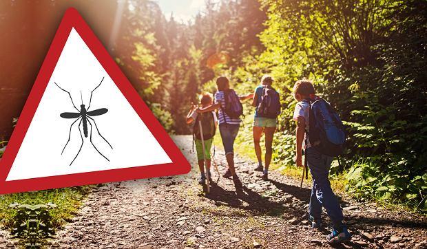 Co gryzie nas latem? Komary, meszki, pluskwy - to nie koniec listy. Oto 9 stworzeń, które psują wakacje