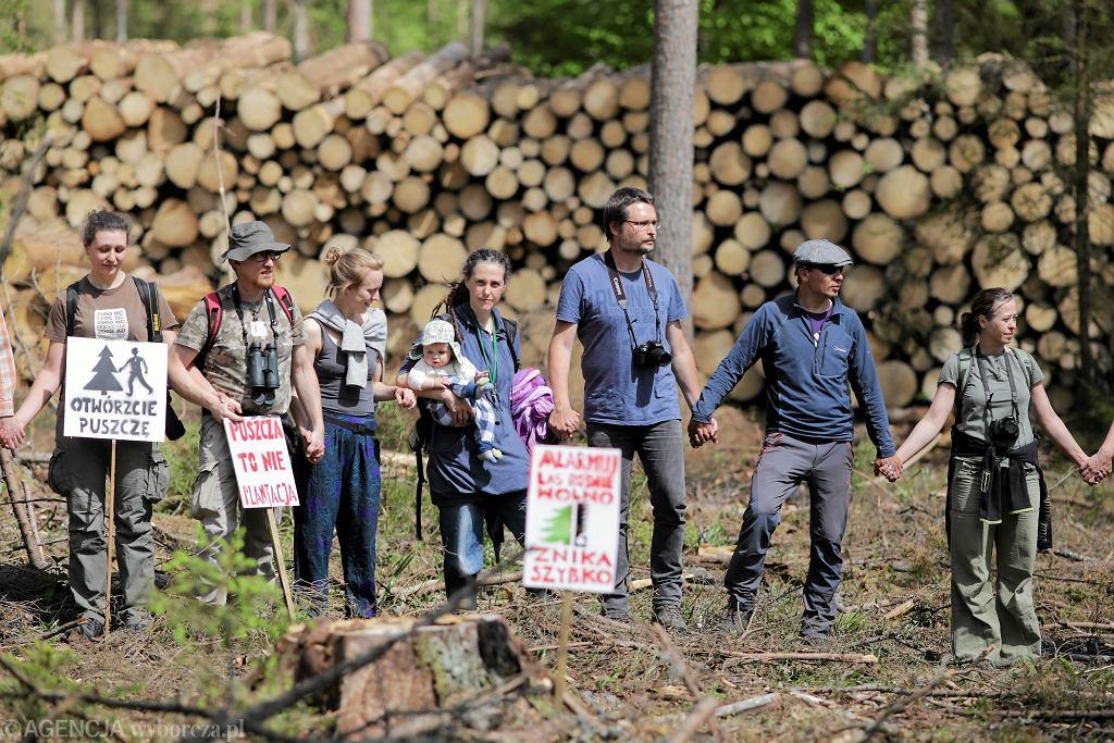 Akcja ekologów i przeciwników wycinki w Puszczy Białowieskiej