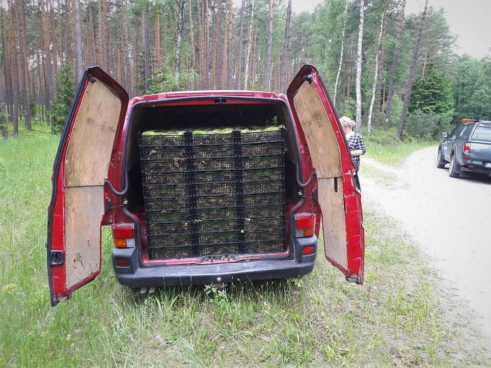 Lubelskie. Leśniczy udaremnili kradzież mchu. Nielegalnych zbieraczy przyłapano na gorącym uczynku