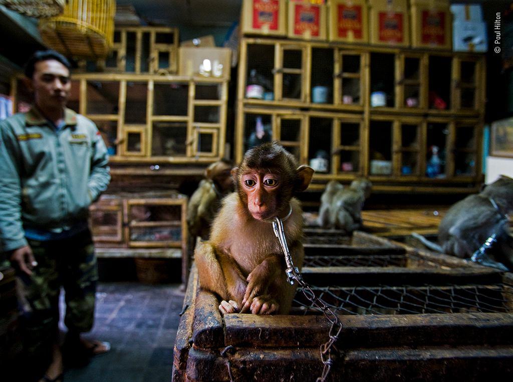 Wildlife Photographer of the Year 2020: makak