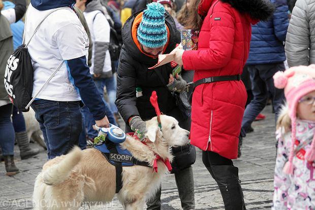 WOŚP 2019 we Wrocławiu 13 stycznia wspierają nawet czworonożni