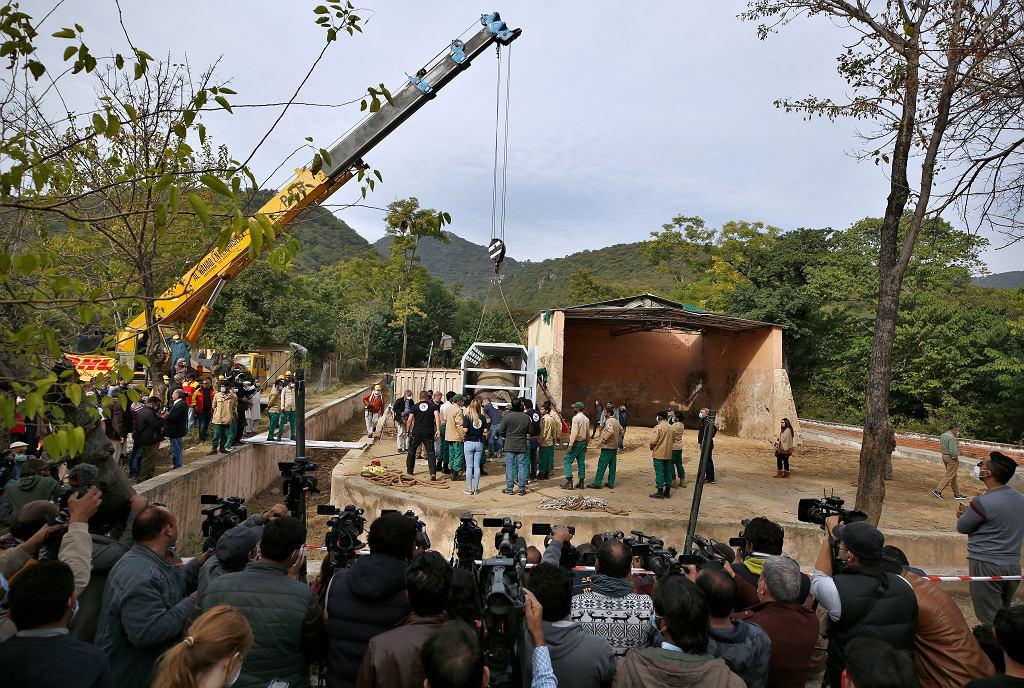Kaavan - 'najbardziej samotny słoń świata' - przed transportem z Islamabadzkiego ZOO do sanktuarium słoni w Kambodży. O poprawę jego losu starała się m.in. amerykańska gwiazda Cher. Pakistan, 27 listopada 2020