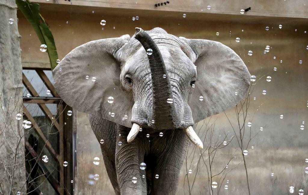 Urodziny słonia Leona