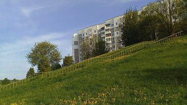 Łąki kwietne to idealna alternatywa dla trawników, również w przestrzeni miejskiej.