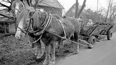 'Fińskie domki' w sosnowieckim Klimontowie rzeczywiście sprowadzano z Finlandii. Do Polski trafiały za węgiel i koks, ale były też i formą wojennych reparacji. Kolonia patronacka im. Wincentego Pstrowskiego powstawała w latach 1947-50. Polska za węgiel i koks sprzedawany do Finlandii otrzymywała w zamian domki składane z prefabrykatów. Pomysłodawcą tej transakcji był Jan Mitręga, minister górnictwa i energetyki. To miał być sposób na zaspokojenie głodu mieszkaniowego. Zdjęcia w galerii pochodzą ze stycznia roku 1994.
