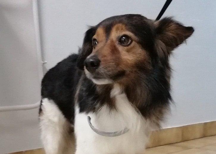 Pies, który jeździł koleją, wrócił do domu. Chciał wrócić do ukochanej, którą poznał nad morzem