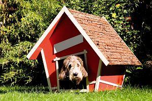 Buda dla psa - jak wybrać najlepszą?