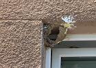 Metalowe kolce, wejścia zatkane papierem. Kto zniszczył gniazda jaskółek w Warszawie?