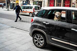 Jak przewozić zwierzęta samochodem?