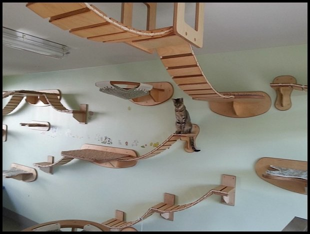 http://www.mymodernmet.com/profiles/blogs/goldtatze-cat-playground-room