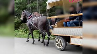 Aktywiści alarmują ws. kulejącego konia nad Morskim Okiem