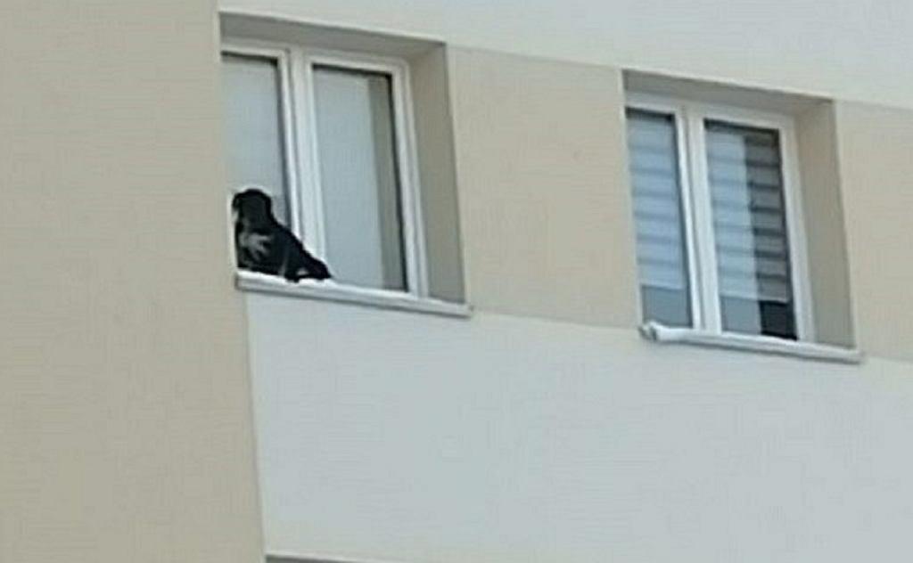 Pies wystawiony na parapet
