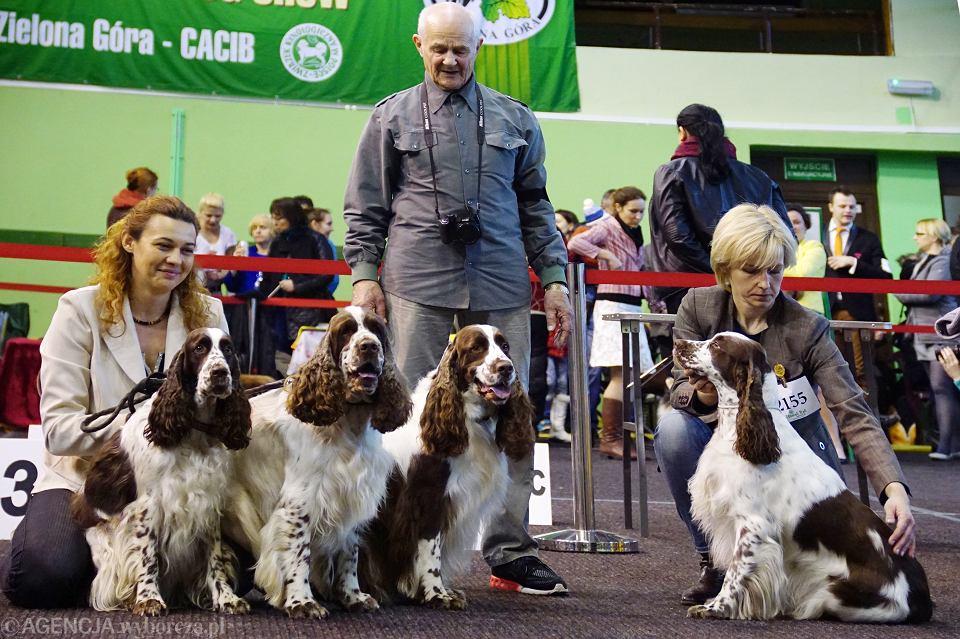 Kiedy pies jest rasowy? - Polski Klub Kynologiczny