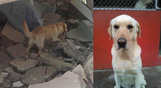 Pies Dayko, który umarł po akcji ratunkowej w Ekwadorze