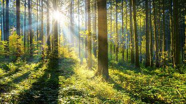 LG stawia na ekologiczne rozwiązania.