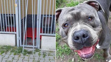 Ze schroniska we Wrocławiu skradziono psa