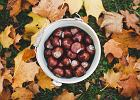 Ludziki i zwierzątka z kasztanów to świetna zabawa dla dzieci na jesień - jak je zrobić?