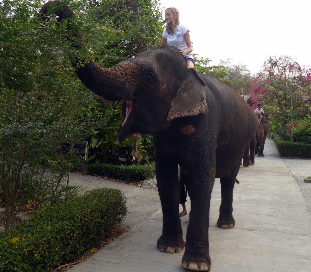 Wolontariat w wiosce słoni