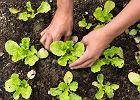 Jakie warzywa warto uprawiać w ogrodzie?