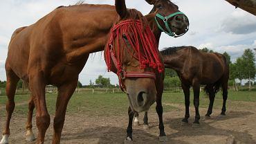 Konie (zdj. ilustracyjne)