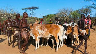 Według Human Rights Watch budowa tamy na rzece Omo i przedsiębiorstw rolnych sprawi, że 500 tys. ludzi w tej części Afryki zostanie zmuszonych do migracji i zmiany trybu życia. Pasterze z doliny Omo (na zdjęciu) już teraz cierpią z powodu niedoboru wody