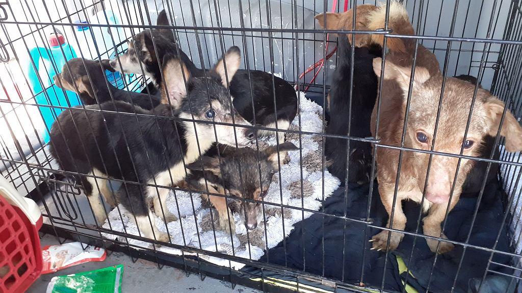 Interwencja u kobiety, która mieszkała z 57 psami