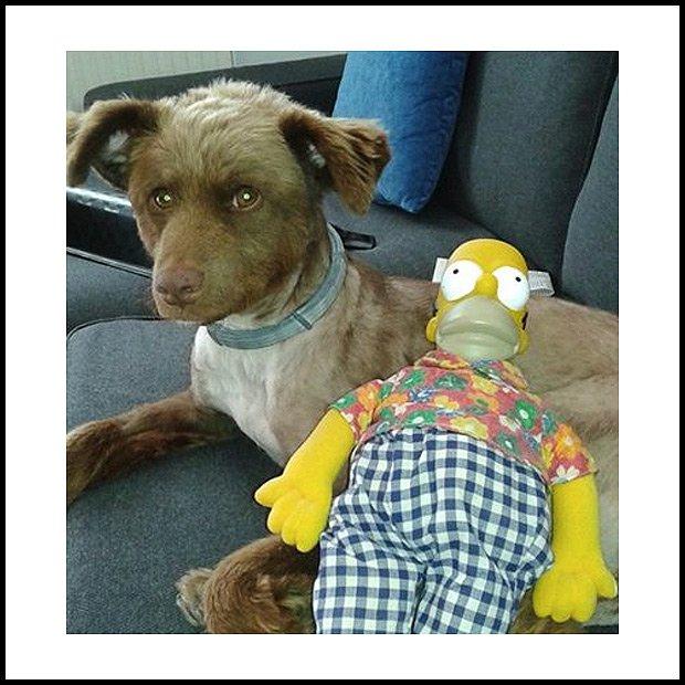 Pies i Simpsonowie - najlepsze poprawiacze humoru (Fot. Miss Olgu)
