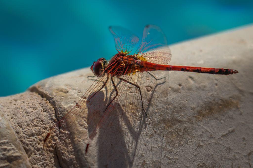 Komary w basenie.