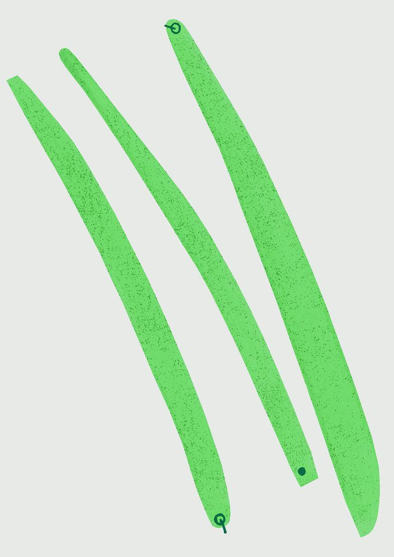 Zdjęcie numer 2 w galerii - Fasolka szparagowa. Jak ją jeść?