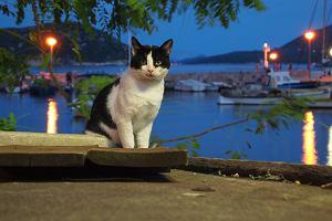 Mniej znane albo bezludne: Wyspy Chorwacji