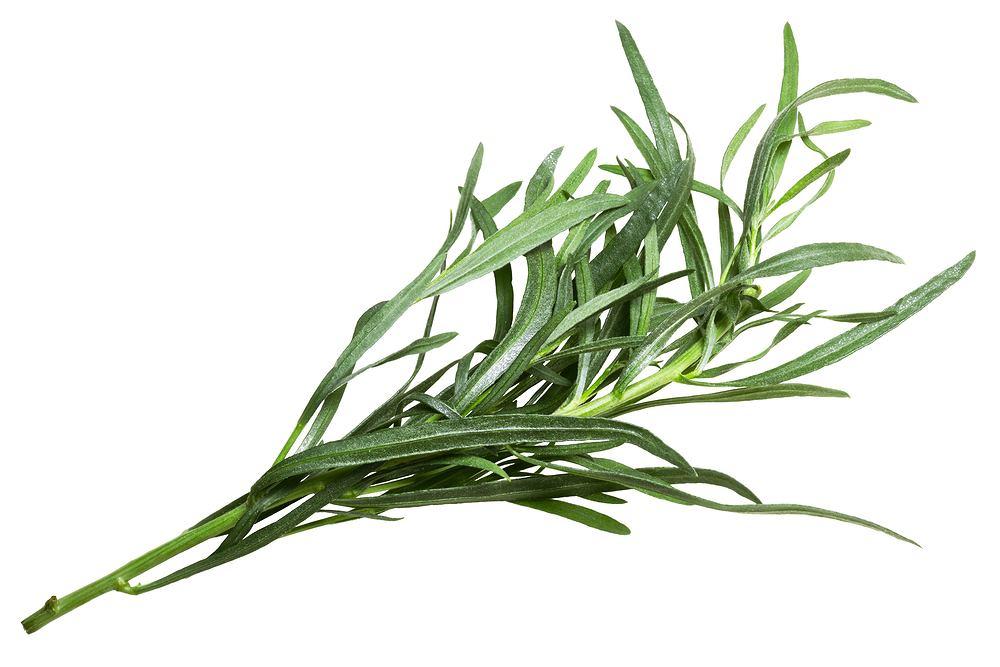 Zwykle używa się suszonego estragonu, ale najbardziej aromatyczne są świeżo zerwane listki