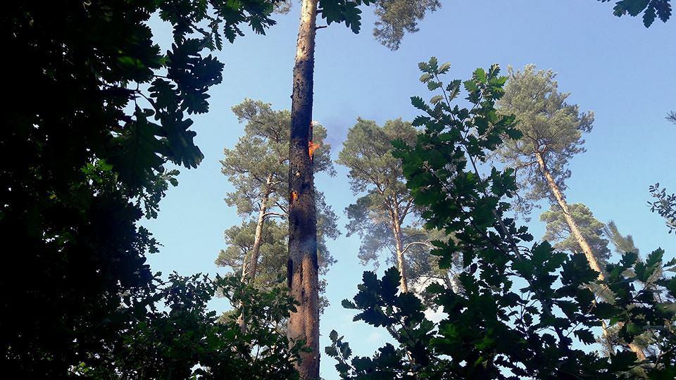 Pożar pojedynczego drzewa - Nowy Świat