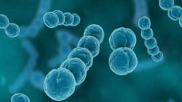 Rozwój choroby to konsekwencja zakażenia paciorkowcem
