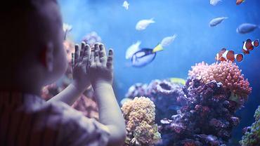 Jakie rybki do akwarium? Rybki akwariowe dobieramy m.in. pod kątem tego, na jaki rodzaj akwarium się decydujemy (czy będzie ono słodko- czy słonowodne), a także jaka będzie jego pojemność.