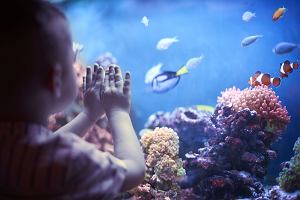 Rybki akwariowe - jakie rybki do akwarium?