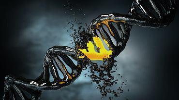 Cząsteczka DNA