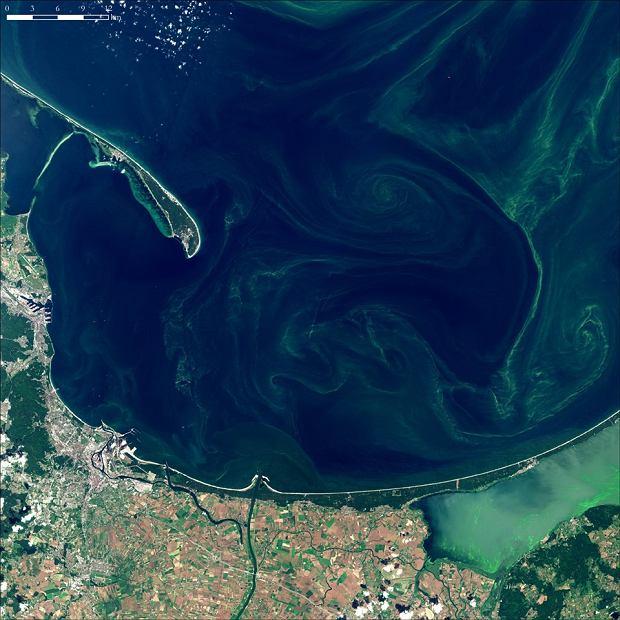15 lipca 2019. Zakwit sinic w Zatoce Gdańskiej. Zdjęcie z satelity Sentinel