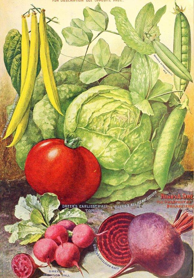 Kup warzywa w różnych kolorach (fot. Wikimedia Commons)