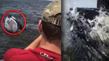 Humbak niespodziewanie wyskoczył z wody.
